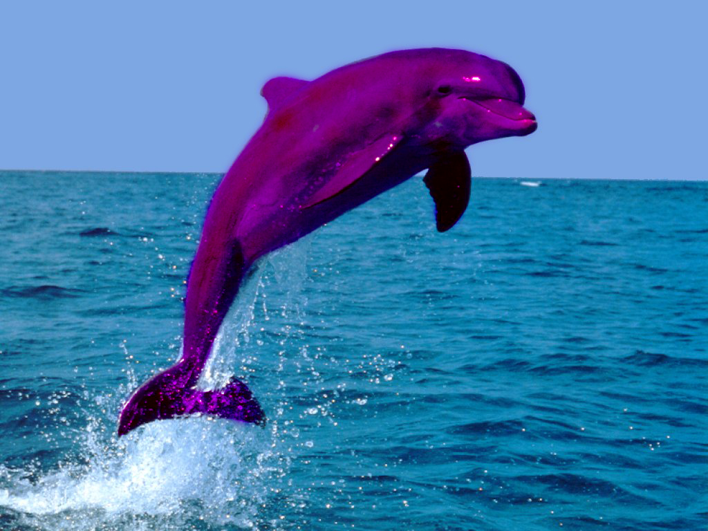 Image Gallery Pink Dolphin